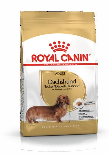 Imagem de ROYAL CANIN   Dog Dachshund Adult